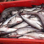 für 0,42 € haben wir auch einen Fisch mitgenommen und am Abend gegrillt