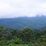 der Weg führt uns weiter am Regenwald entlang