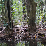 eine Kahnfahrt im Dschungel