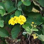 auch Blüten gibt es noch zur Zeit, obwohl dafür die Saison vorbei ist