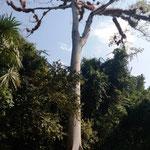 riesen Baum