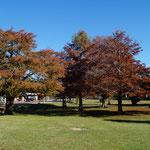 es ist Herbst hier - aber Tagsüber Temperaturen bis 28 Grad