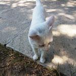 Katze krazt und beißt - nicht lieb