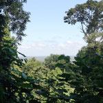 tolle Aussicht im Dschungel