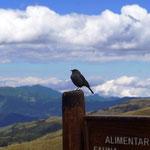 sogar Vögel gibt es in 4.000 m Höhe