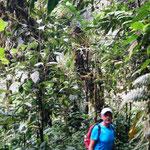 wilder Regenwald