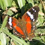 ein Schmetterding