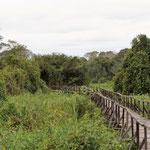 der Wanderweg über die Holzbrücke , unter uns Wasser