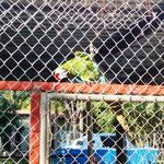 Papageien in der Ferienanlage