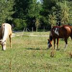 die Pferdchen wohnen gleich nebenan