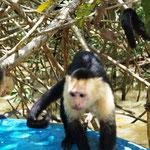 der führt einen Affentanz auf