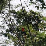 Papagei auf dem Hinweg