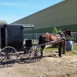 die Kutsche des gesprächigen Mennoniten