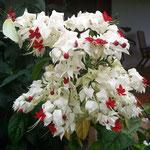 wunderhübsche Pflanzen