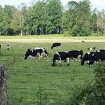 unterwegs viel Landwirtschaft