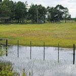 viele Wiesen sind überschwemmt