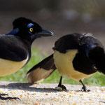 und dann beobachten wir die Vögel bei ihrer Mahlzeit