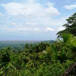 aber hier oben ist ein wunderbarer Ausblick über den Regenwald