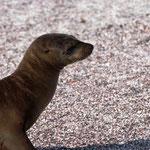 und wieder ein neugieriger Seelöve