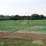 viel Landwirtschaft
