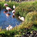 hier schlafen die Flamingos