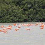 und dann der orange Teppich aus Flamingos