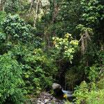 ein Dschungel aus GRÜN