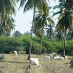 und Viehzucht