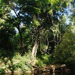 Am Fluss bei Belmopan