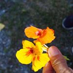 Geschenk vom Farmer - Essblumen
