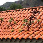 da mecker noch einer über Moos auf dem Dach