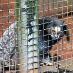 wir schauen uns die einheimischen Tiere im kleinen Zoo an