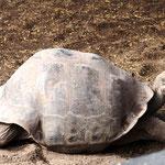 ganz relaxt in der Schildkrötenstation