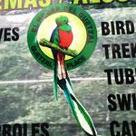 so ungefähr kann ein Quetzal aussehen