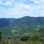 gesunde Nadelwälder