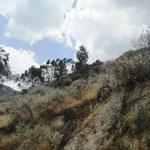 wir sind auf 4.000 m Höhe und noch immer Vegetation