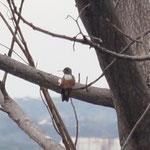 und das ist ein Kolibri