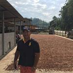 hier liegen die Kakao-Bohnen zum vor-trocknen