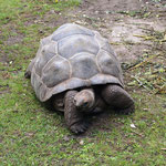 Miss Turtle hat uns begrüßt