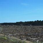 Erschreckend - Überall unterwegs werden die Wälder abgeholzt!