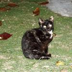 und die arme Katze besucht uns (hat nur 3 Beine!)