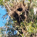 Papageien-Nest