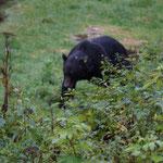 da kommt der Bär