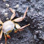 überall auch die Krabben-Krabbler