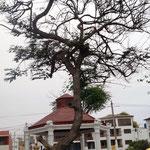 der Baum ist lustig gewachsen