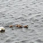 Familie Ente mit Nachwuchs