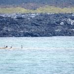 die Pelikane reiten auf dem heißen Strom