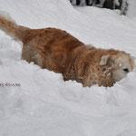 sooooooo viel Schnee !