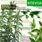 Stevia propiedades. Infografía