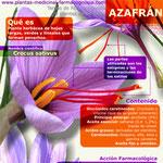 Azafrán infografía